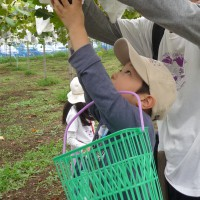 event_fruitpicking